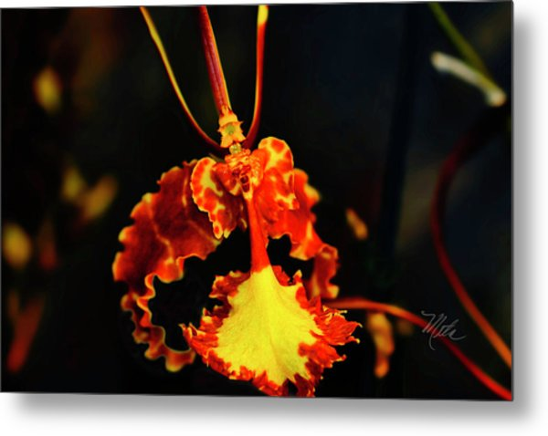 Orchid Study Four Metal Print