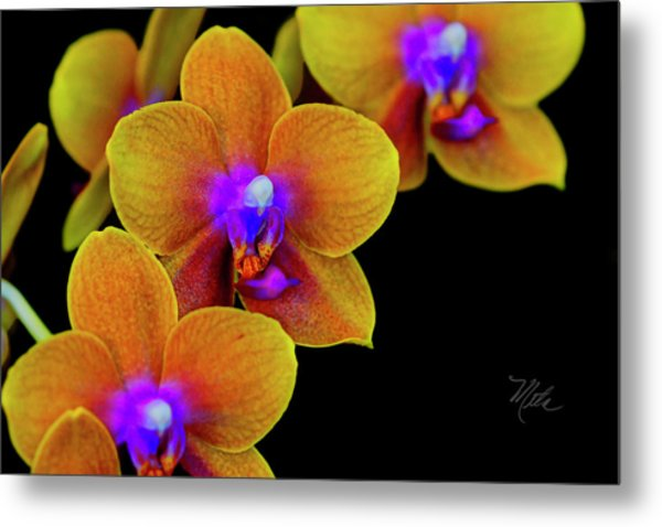 Orchid Study Ten Metal Print