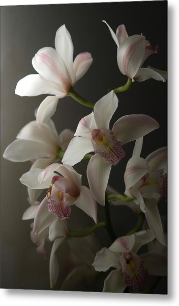 Orchids, Close-up Metal Print by Kate Connell