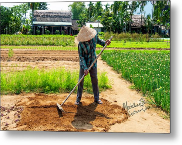 Organic Farmer In Hoi An, Vietnam Metal Print