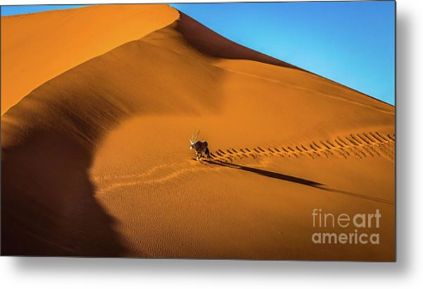 Oryx Crossing Big Daddy Dune, Sossusvlei, Namibia Metal Print