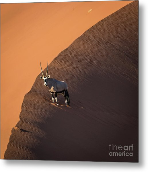 Oryx On The Edge, Namibia Metal Print