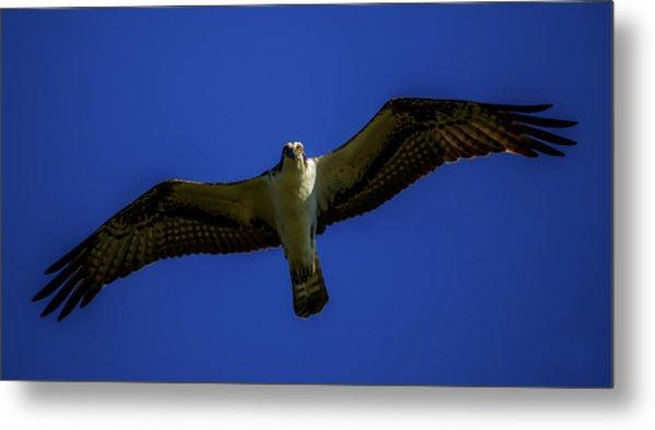 Osprey Glide In Blue Metal Print
