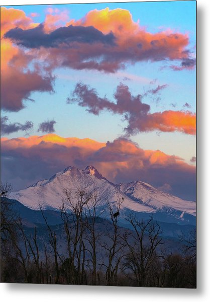 Osprey Perched Beneath A Towering Longs Peak Metal Print