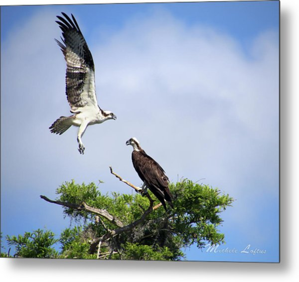 Ospreys At Blue Cypress Lake Metal Print