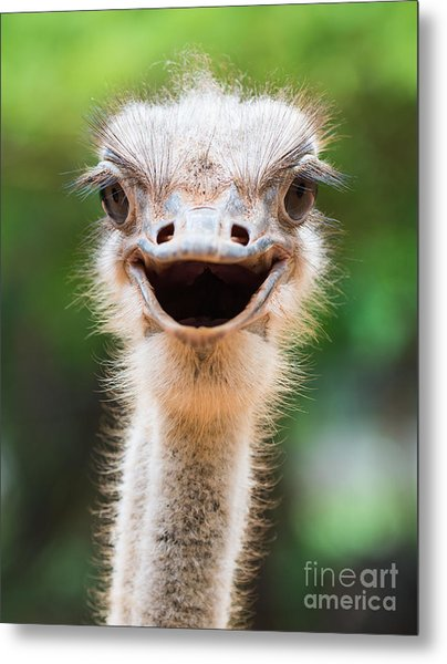 Ostrich Head Closeup Metal Print