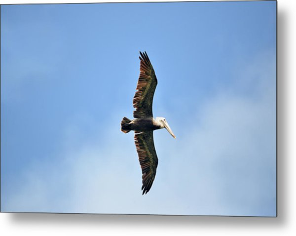 Overflight Metal Print