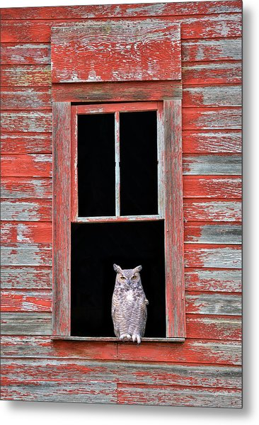Owl Window Metal Print