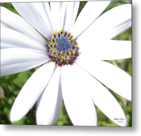 Page 13 From The Book, Peace In The Present Moment. Daisy Brilliance Metal Print