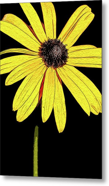 Metal Print featuring the mixed media Painted Black-eyed Susan Portrait by Onyonet  Photo Studios