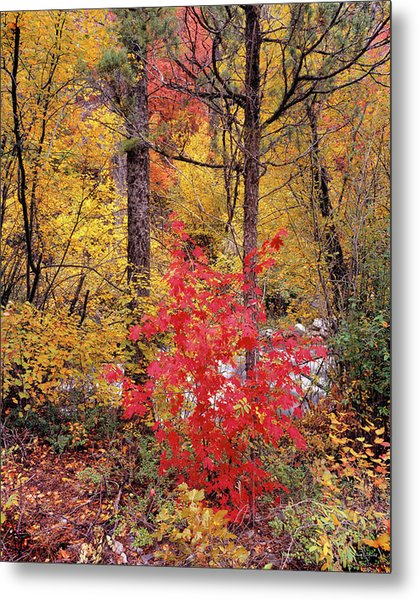 Painted Forest Metal Print by Leland D Howard