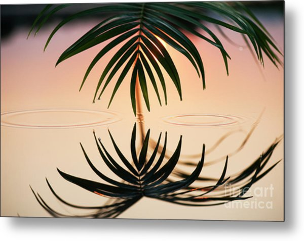 Palm Light Reflection Metal Print by Tim Gainey