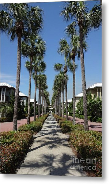 Palm Lined Pathway Metal Print