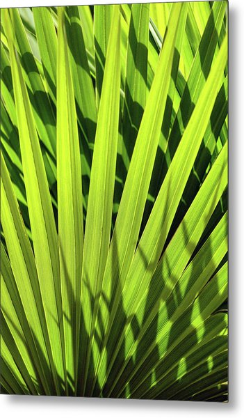 Metal Print featuring the photograph Palm Portrait I by Leda Robertson