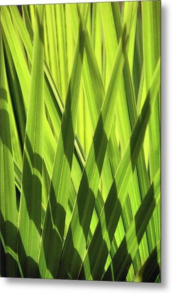 Metal Print featuring the photograph Palm Portrait IIi by Leda Robertson