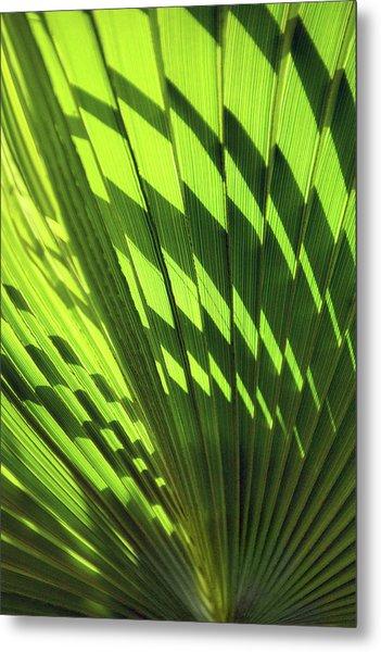 Metal Print featuring the photograph Palm Portrait Iv by Leda Robertson