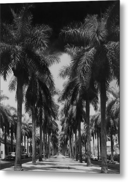 Palm Street Metal Print