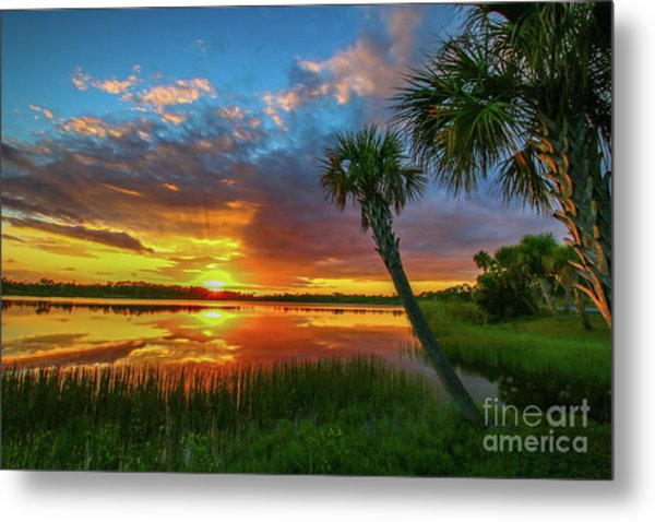 Metal Print featuring the photograph Palm Tree Sunset by Tom Claud