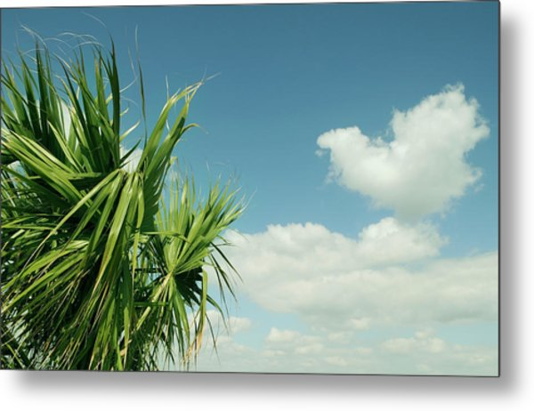 Palms And Clouds Metal Print
