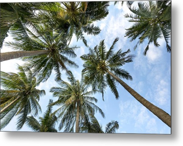 Palms  Beach Metal Print