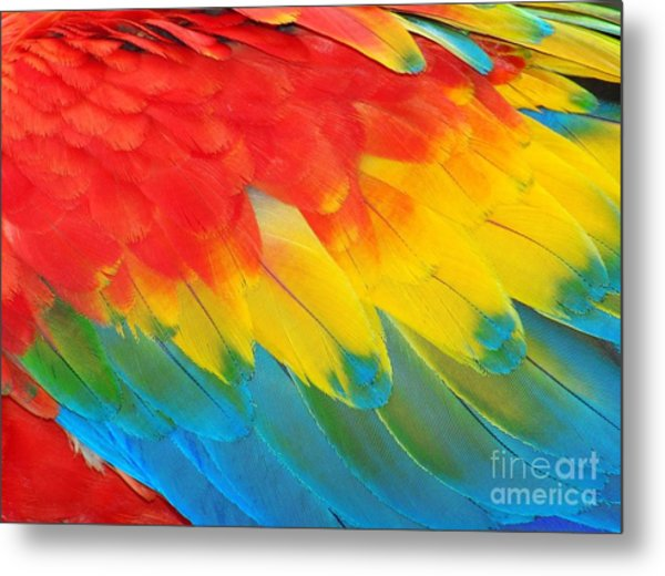 Parrot Feathers, Red And Blue Exotic Metal Print