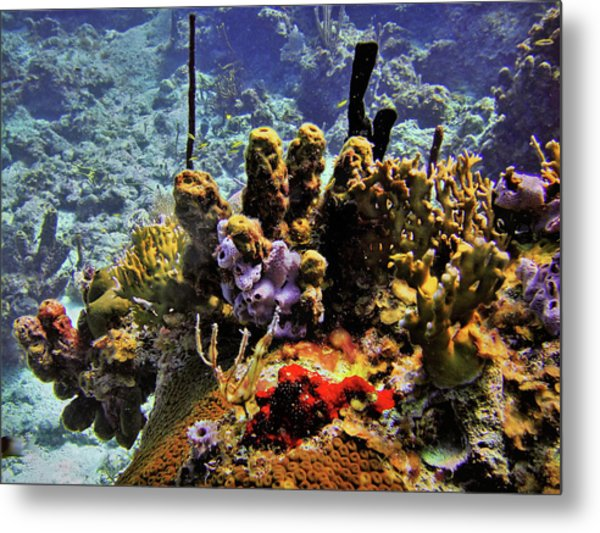 Patch Reef Bluff Metal Print