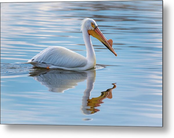 Pelican Reflection Metal Print