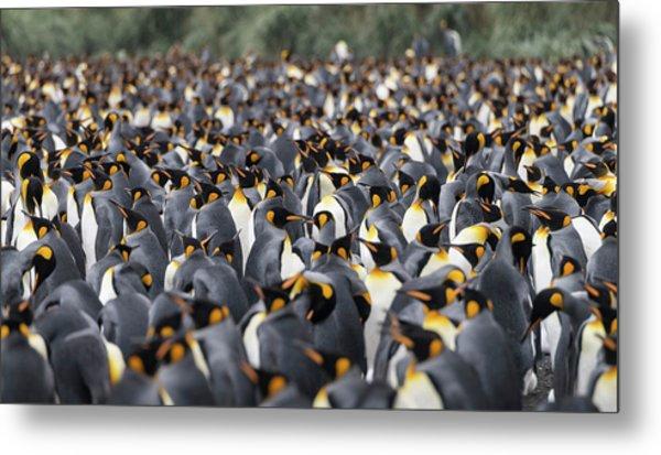 Penguinscape Metal Print