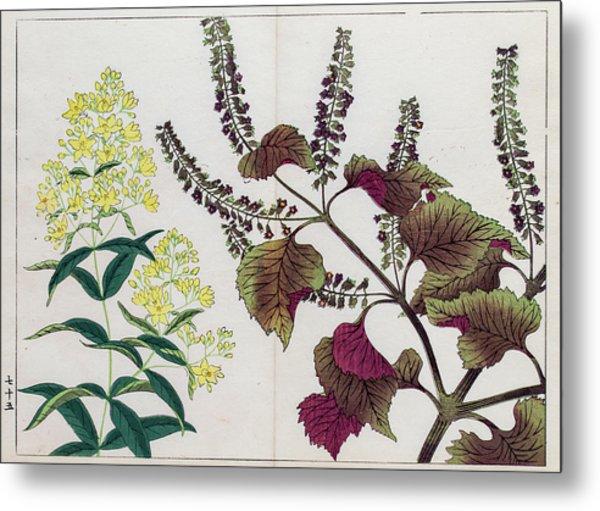 Perilla Plant Japanese Woodblock Print Metal Print