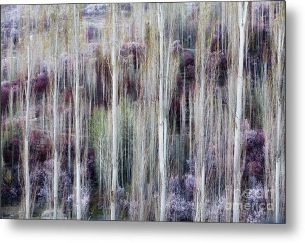 Phases Of Spring  Metal Print