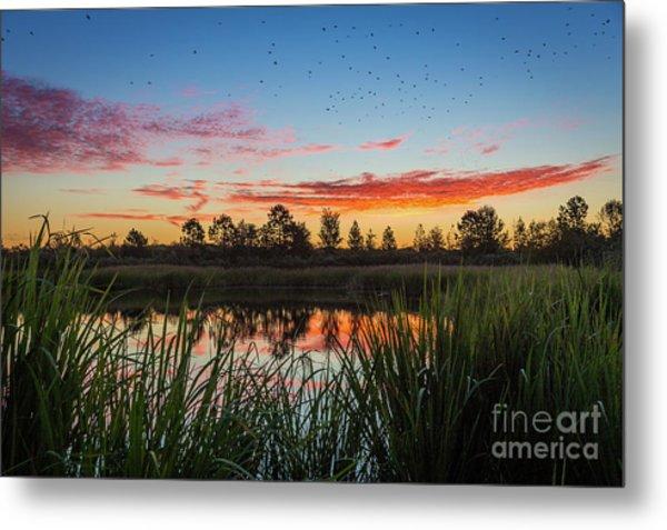 Phinizy Swamp Sunrise - Augusta Ga Metal Print