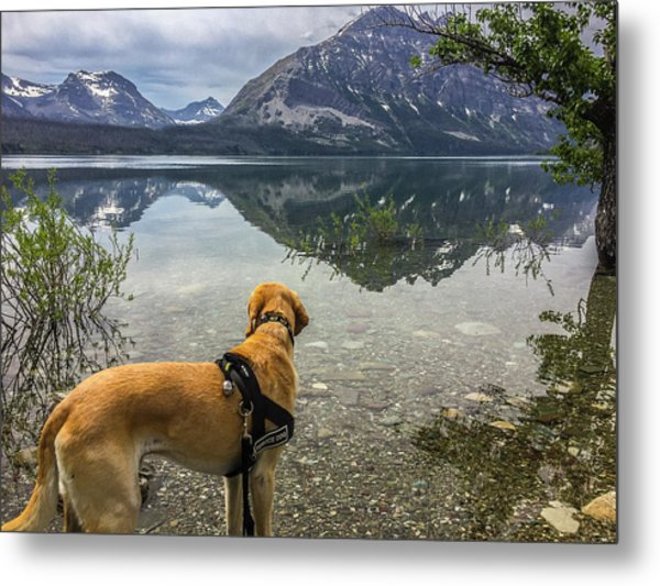 Metal Print featuring the photograph Photo Dog Jackson At Glacier by Matthew Irvin