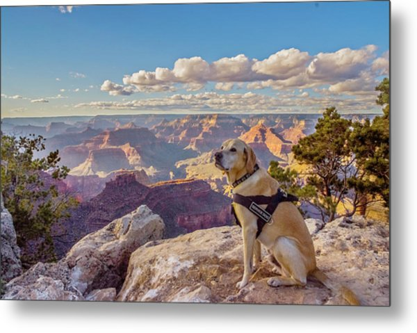 Metal Print featuring the photograph Photo Dog Jackson At The Grand Canyon by Matthew Irvin