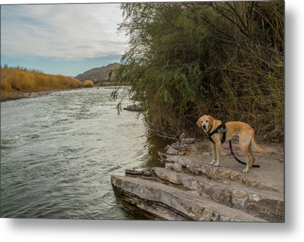 Metal Print featuring the photograph Photo Dog Jackson At The Rio Grande by Matthew Irvin