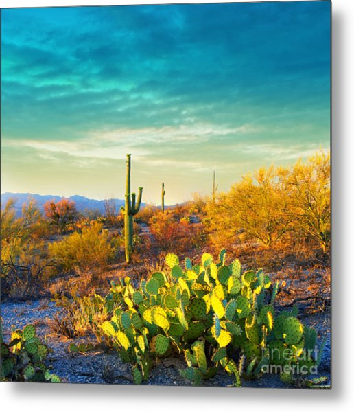 Picturesque, Serene Sunset In Saguaro Metal Print