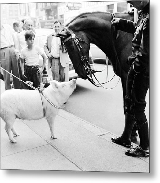 Pig And The Horse Metal Print