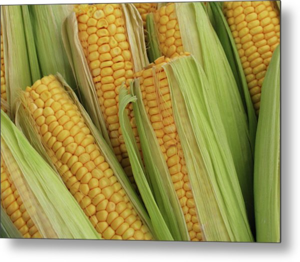 Pile Of Corn On Cob With Top Cut Off Metal Print