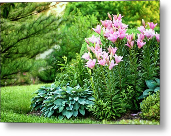 Pink Asiatic Lilies And Hostas Metal Print