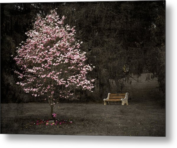 Pink Dogwood Tree And A Bench Metal Print