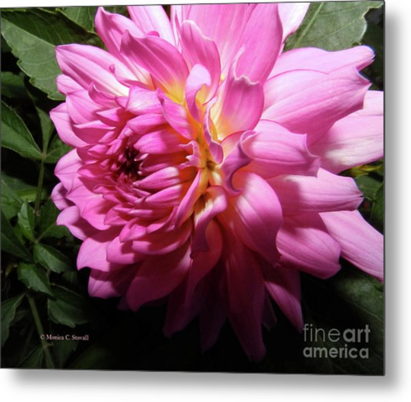 Pink Flower No. 58 Metal Print