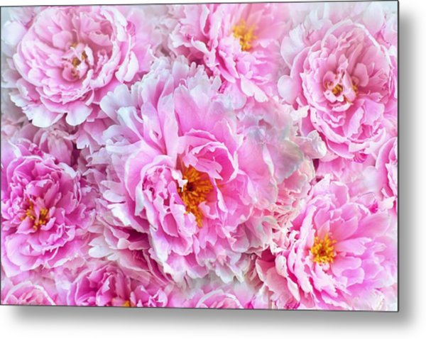 Pink Flowers Everywhere Metal Print