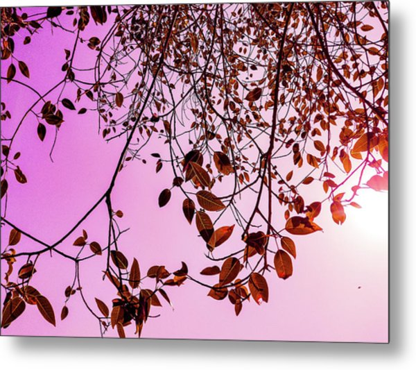 Pink Glow Metal Print