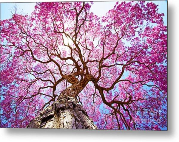Pink Lapacho Tree At Sun´s Back Light Metal Print