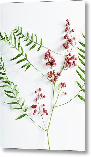 Pink Peppercorn Branch On White Metal Print by Amy Neunsinger