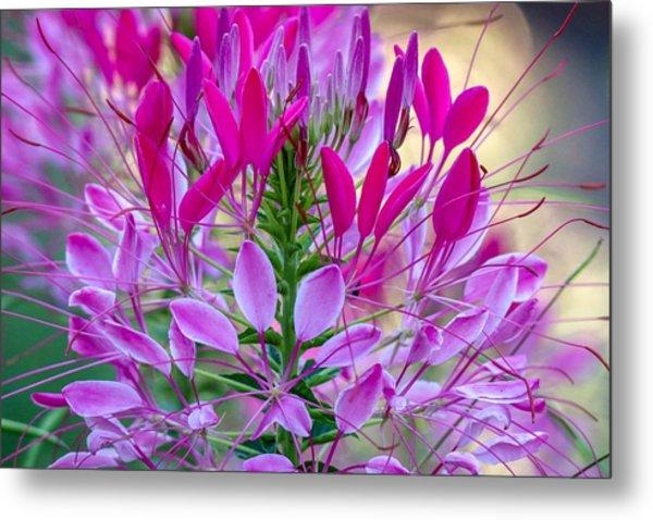 Pink Queen Flower Metal Print