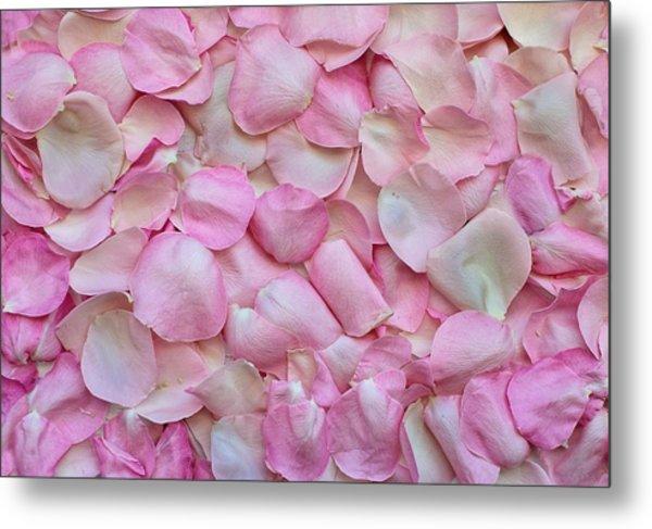 Pink Rose Petals Metal Print