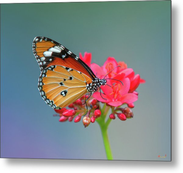 Plain Tiger Or African Monarch Butterfly Dthn0246 Metal Print