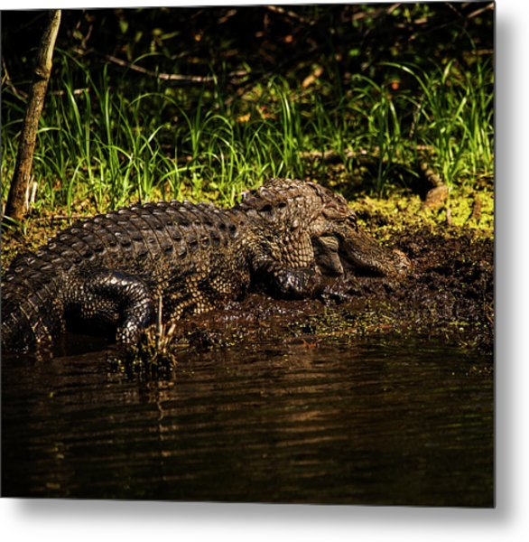 Playing In The Mud Metal Print