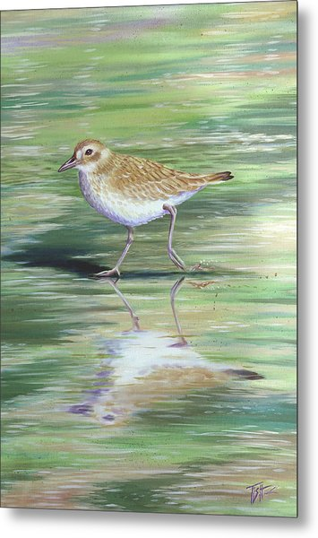 Plover Reflections Metal Print