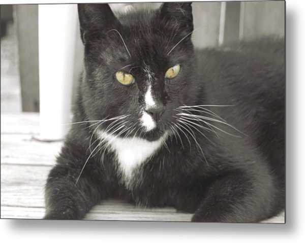 Poes Black Cat Metal Print by JAMART Photography